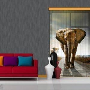 Ag Design Fotoverho Elephant 140x245 Cm