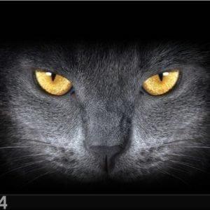 Ag Design Pimentävä Fotoverho Black Cat 280x245 Cm