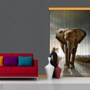 Ag Design Puolipimentävä Fotoverho Elephant 140x245 Cm
