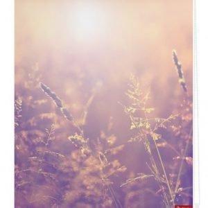 Lichtblick Sonnenschutzsysteme Pingotettava Rullaverho Kesäilta Oranssi
