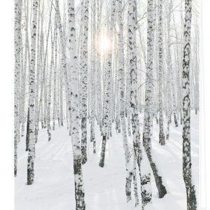 Lichtblick Sonnenschutzsysteme Rullaverho Koivumetsä Valkoinen