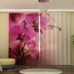 Wellmira Fotoverhot Purpl Orchid