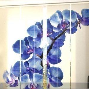 Wellmira Läpinäkyvä Paneeliverho Blue Orchids 240x240 Cm