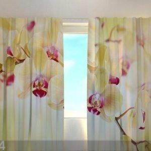 Wellmira Läpinäkyvä Verho Goldish Orchids 240x220 Cm