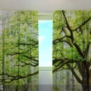 Wellmira Läpinäkyvä Verho Green Tree 240x220 Cm