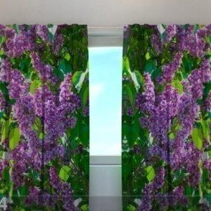 Wellmira Läpinäkyvä Verho Lilac 1