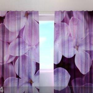 Wellmira Läpinäkyvä Verho Lilac 240x220 Cm