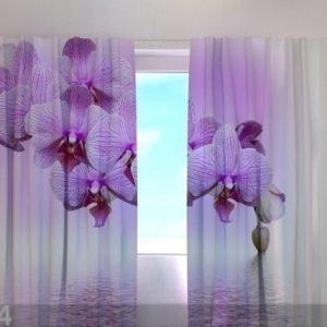 Wellmira Läpinäkyvä Verho Lilac Beauty 240x220 Cm