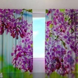 Wellmira Läpinäkyvä Verho Lilac May 240x220 Cm