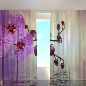 Wellmira Läpinäkyvä Verho Lilaceous Orchid 240x220 Cm