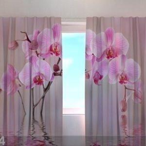 Wellmira Läpinäkyvä Verho Lily Orchid 240x220 Cm
