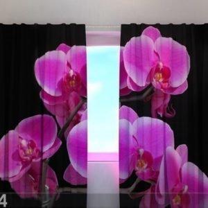 Wellmira Läpinäkyvä Verho Orchid Twig 240x220 Cm