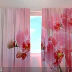 Wellmira Läpinäkyvä Verho Pink Orchid 240x220 Cm