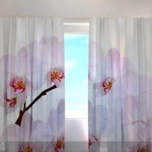 Wellmira Läpinäkyvä Verho Snow-White Orchid 240x220 Cm