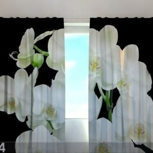 Wellmira Läpinäkyvä Verho Yin Yang Orchid 240x220 Cm