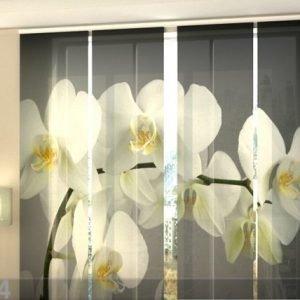 Wellmira Puolipimentävä Paneeliverho Song Orchids 240x240 Cm