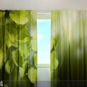 Wellmira Puolipimentävä Verho Leaves 240x220 Cm