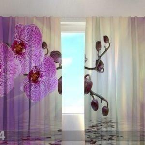 Wellmira Puolipimentävä Verho Lilaceous Orchid 240x220 Cm