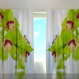 Wellmira Puolipimentävä Verho Lime Coloured Orchid 240x220 Cm