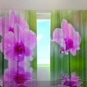 Wellmira Puolipimentävä Verho Three Orchids 240x220 Cm