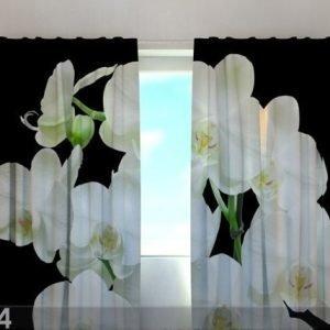 Wellmira Puolipimentävä Verho Yin Yang Orchid 240x220 Cm