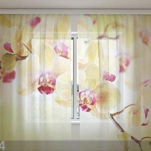 Wellmira Sifonki-Kuvaverho Goldsih Orchids 240x220 Cm