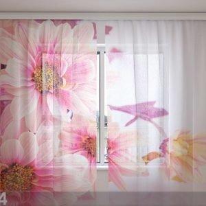 Wellmira Sifonki-Kuvaverho Pink Gerberas 240x220 Cm
