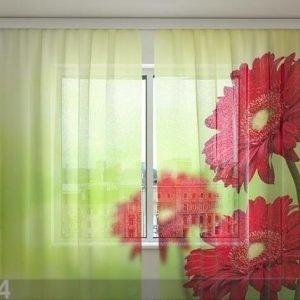 Wellmira Sifonki-Kuvaverho Red Gerberas 240x220 Cm