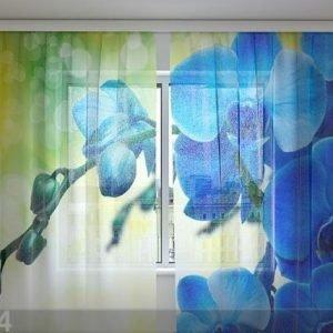 Wellmira Sifonki-Kuvaverho Royal Orchid 240x220 Cm